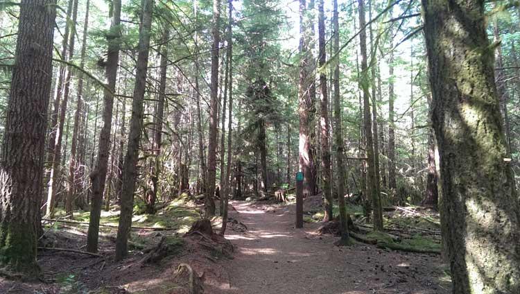 Alice Lake Hiking